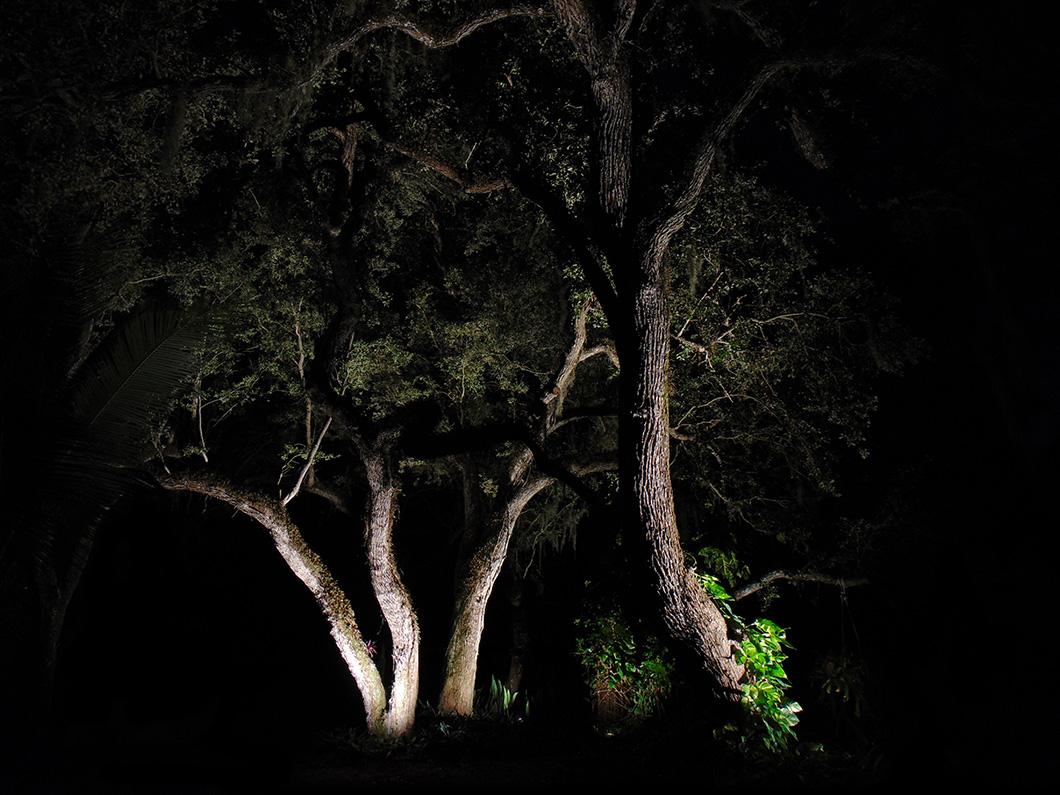 Tree Lighting - Holly Road