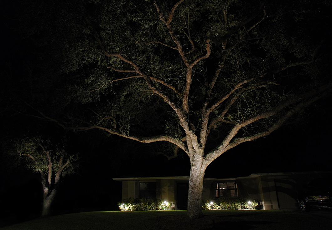 Tree Lighting - Vereen
