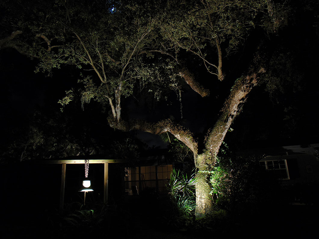 Tree Lighting 4 - Holly Road