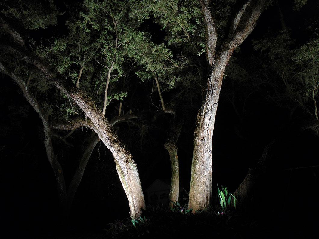 Tree Lighting 3 - Holly Road