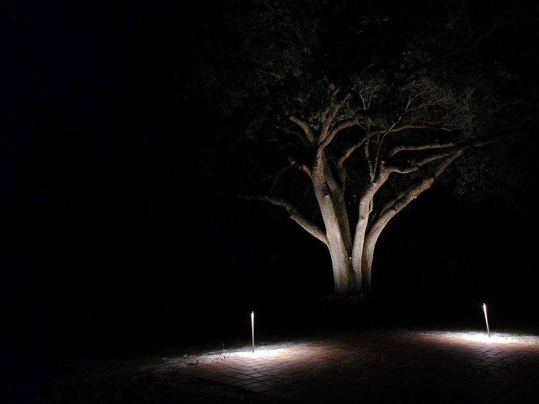 Tree Lighting 2 - Travis