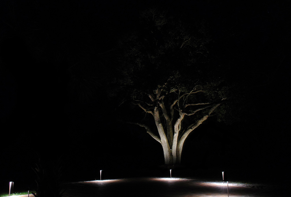 Tree Lighting - Travis